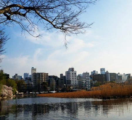 lake and buildings photo