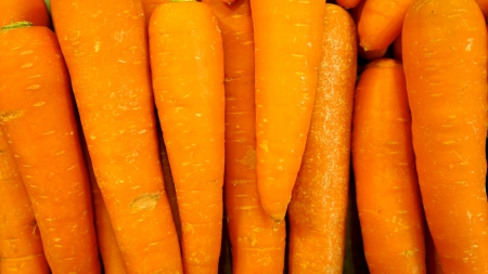 Carrot background photo