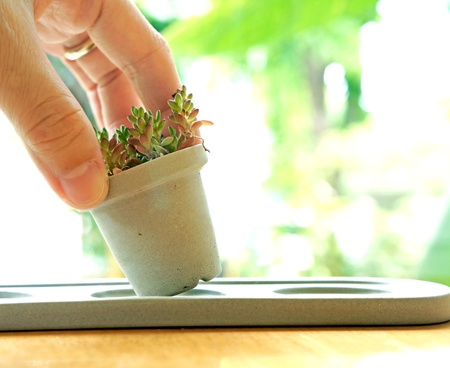 Hand put a little pot of cactus Stock Photo - 21741657