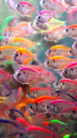 네온 물고기 스톡 콘텐츠