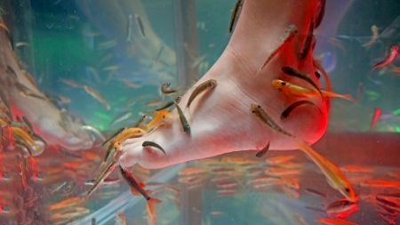 Fish spa feet pedicure skin care treatment with the fishes photo