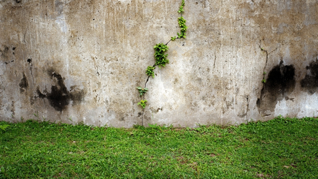 Old wall and green grass photo