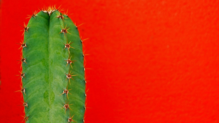 Green cactus on red background photo