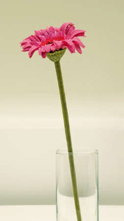 pink flower in glass photo