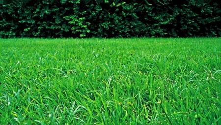 녹색 나무 울타리와 녹색 잔디