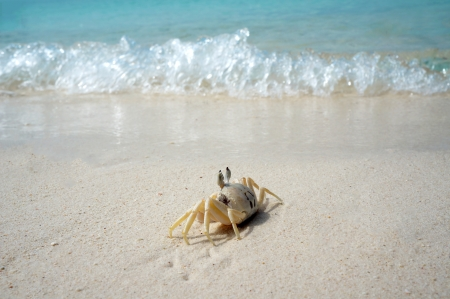 Crab on shore photo