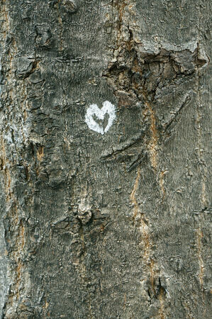 Love forever  Heart shape on tree bark photo