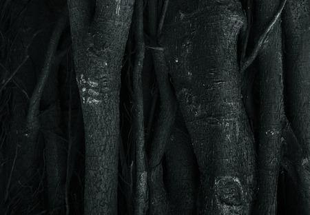 centenarian: Dark tree root background