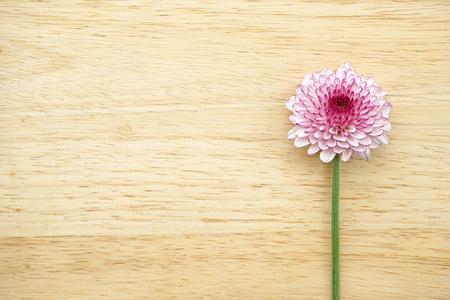 single purple flower on wooden background photo