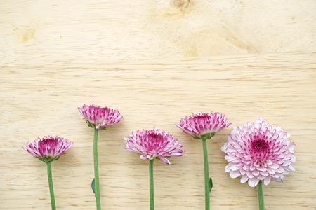 Purple gerbera flowers on wooden table photo