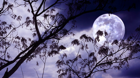 Halloween background. Spooky forest with full moon and dead trees photo