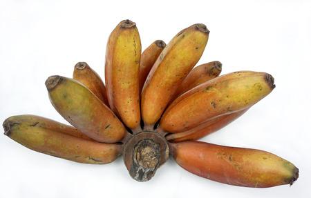 musa: Banana Kluai Nam Wa Dam thai name (Musa Banana).