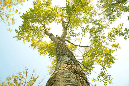 나무 밑면 스톡 콘텐츠
