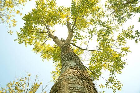 Tree bottom view