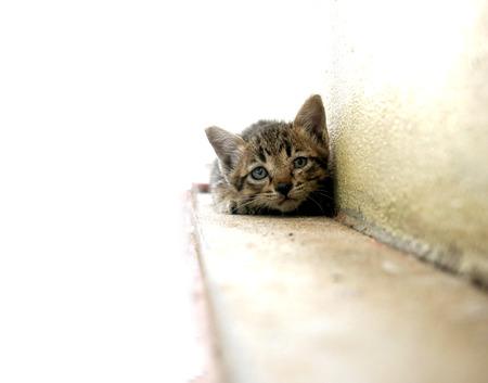 Portrait of dirty kitten on street Stock Photo