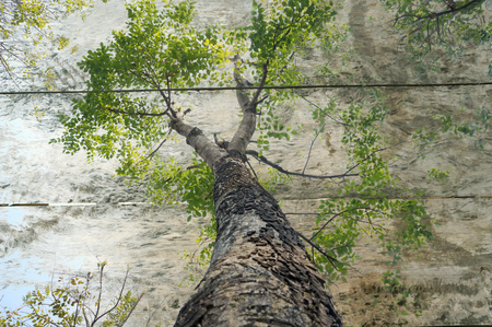 Double exposure of green tree and wooden board. Nature background photo