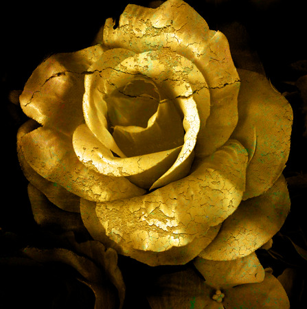 abstract rose: Gold cracked flower, old rose, art dark tone.