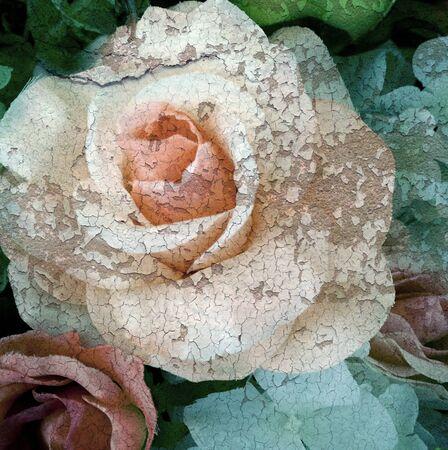 Cracked flower, old rose, art dark tone. Standard-Bild