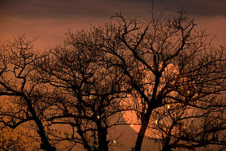 spooky tree: bright full moon with spooky tree branches background