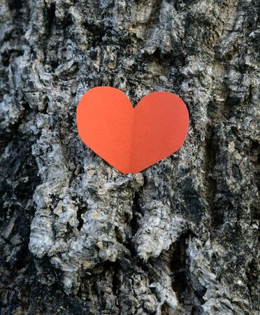 loveheart: paper red heart shape at tree bark background
