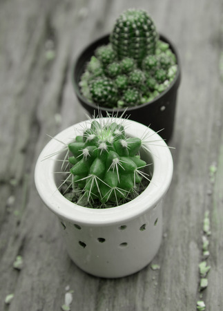 prickle: Cactus with prickle