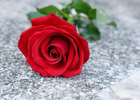 Rote Rose (Valentines Tag)