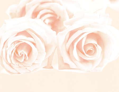 rosa suavidad levantó en el fondo de color rosa