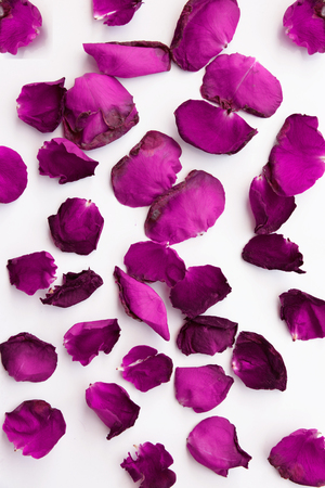 scattered on white background: Red rose petals scattered on white background
