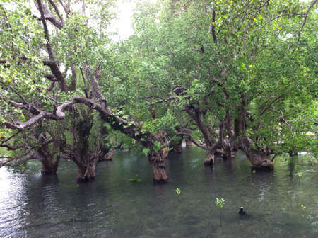 mangrove: Mangrove.