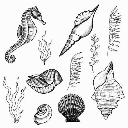 Flora and fauna of the seabed set. Underwater world of the ocean, hand drawn doodle outline. Seaweed, seahorse, shells icon. Stock illustration isolated on white. Illustration