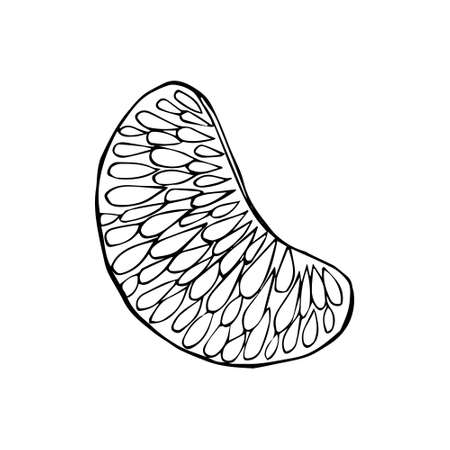 Peeled wedge citrus slice. Slice of tangerine lemon orange grapefruit hand drawn black outline doodle sketch. Coloring book. Stock vector illustration isolated on white background.