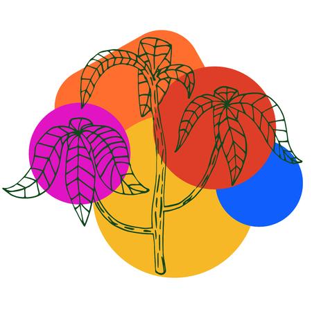 Ficus flower isolated on white background. Vector illustration. Çizim