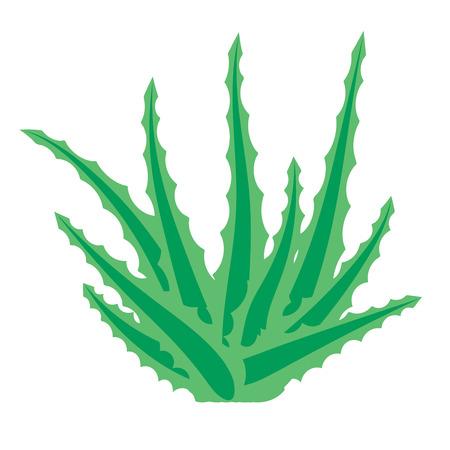 Aloe vera, succulent plant, flower isolated on white background. Vector illustration.