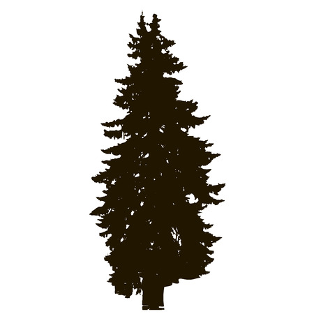 Spruce tree realistic silhouette isolated on white background. Vector illustration.