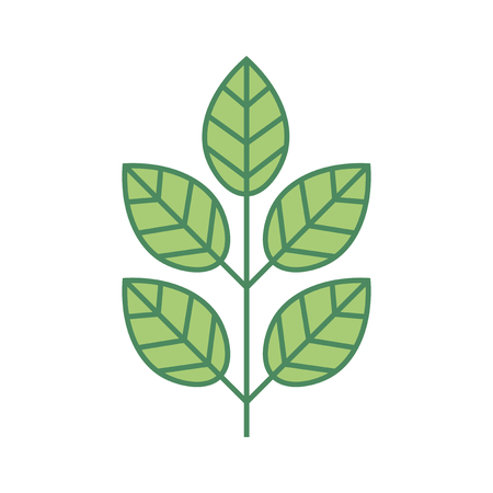 Plant thin line icon isolated on white background. Thin line foliage icon. Tree branch with leaves. Vector illustration.