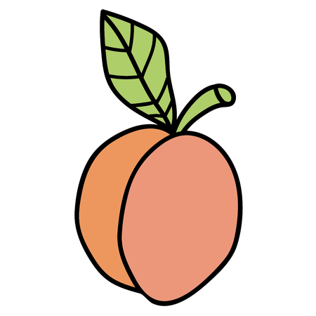 Cartoon doodle linear apricot with leaf isolated on white background. Vector illustration.