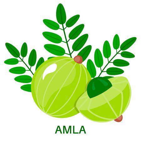 Amla icon in flat style isolated on white background. Indian gooseberry. Medical fruit. Vector illustration.