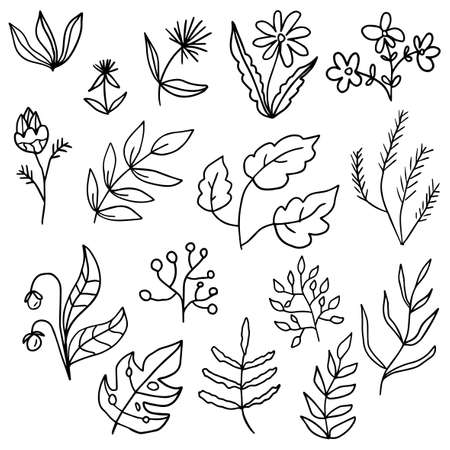 Floral set of black outline hand drawn elements, flowers, tree branch, bush, plant, tropical leaves, branches, petals isolated on white. Collection for design. Иллюстрация