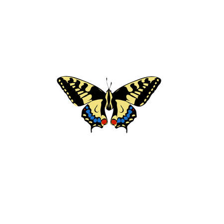 Swallowtail Butterfly pattern insect Illustration