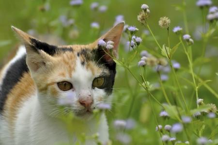 Gatito jugando en la hierba