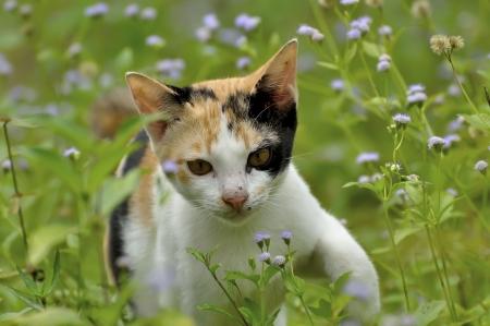 Gato jugando poco en la hierba