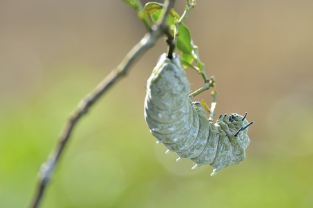 fairly: Caterpillars in a fairly motion with blur background Stock Photo