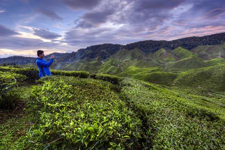 capturing: Cameron Highland, Malaysia - October 31, 2015 : Young man capturing the beautiful Tea Valley during beautiful sunset