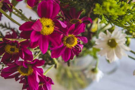 natural flowers of striking colors 版權商用圖片