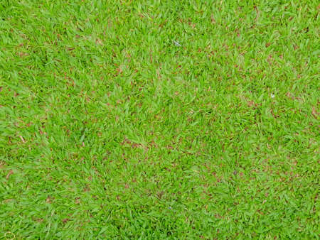 Field of fresh green grass texture as a background, top close up view, horizontal Stock Photo
