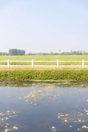 front view of green agricultural field with white fence,lake and sky in summer.