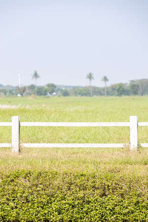front view of green agricultural field with white fence and sky in summer.