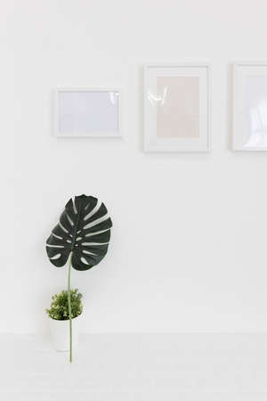picture frame on white wall with small green leaves and plant pot.
