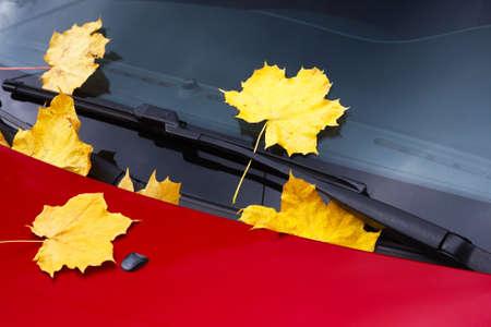 Fallen autumn leaves on car windshield