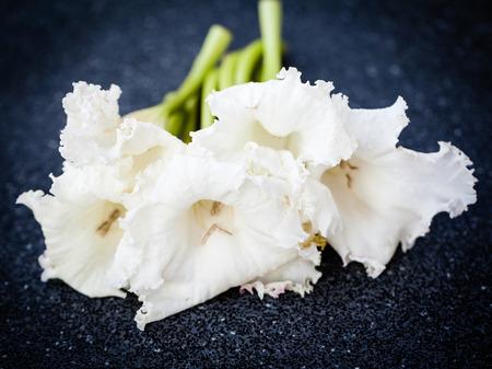 to seem: Dolichandrone serrulata (DC.) Seem blossom. herb Stock Photo